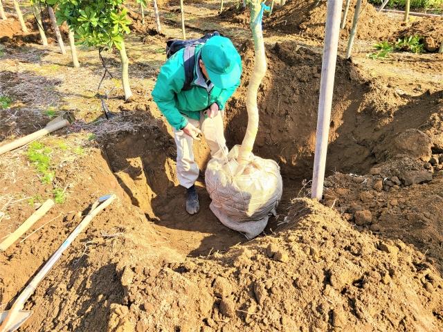 CSR活動の例。植樹。